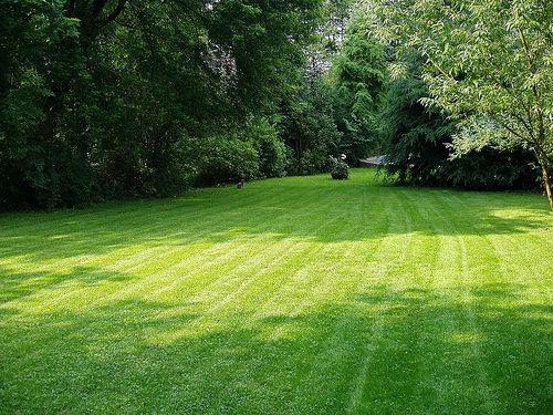 lawn1